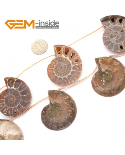 G9596 25-30mm Gemstone Conch Fossil DIY Jewelry Jewellery Making Loose Beads 7 Pcs Natural Stone Beads for Jewelry Making Wholesale`